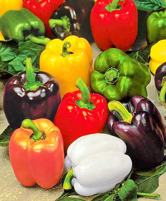 особенности выращивания сладкого перца в теплице и открытом грунте 7