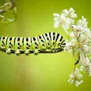борьба с гусеницами в саду и огороде 1