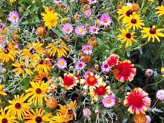 какие многолетние цветы можно посадить осенью, многолетние цветы для клумбы 2