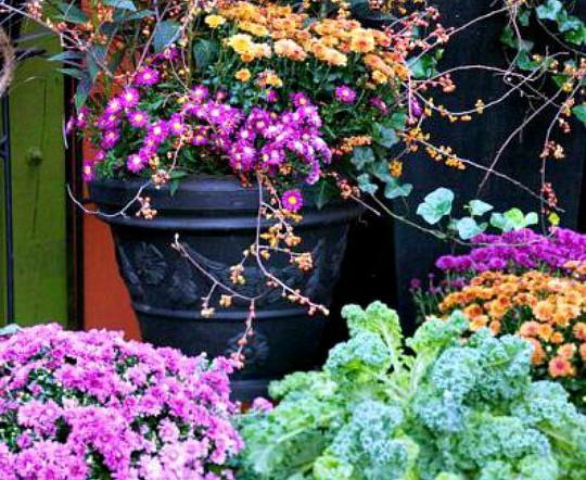 какие многолетние цветы можно посадить осенью, многолетние цветы для клумбы 3