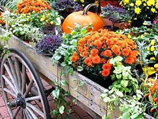какие многолетние цветы можно посадить осенью, многолетние цветы для клумбы 6
