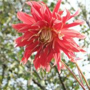 какие многолетние цветы можно посадить осенью, многолетние цветы для клумбы 8