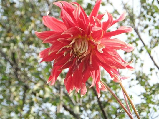 какие многолетние цветы можно посадить осенью, многолетние цветы для клумбы